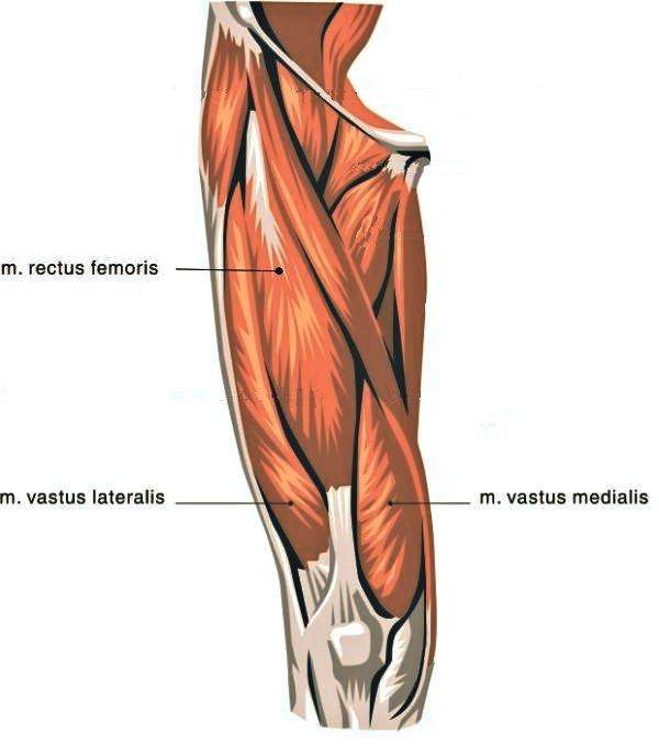 Knee Extensors OA